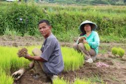 voyage-indonesie-sumatra-pays minang-rizieres (17)
