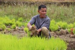 voyage-indonesie-sumatra-pays minang-rizieres (22)